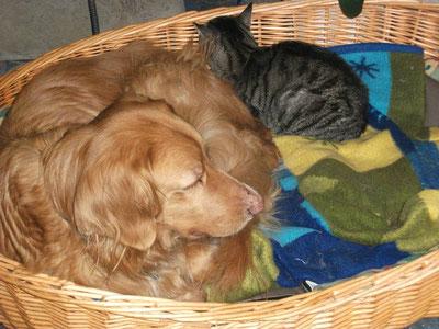 Pflegehund Bonnie bei Pflegestelle Claudia
