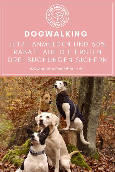 Gassi-Service Hund aufs Herz