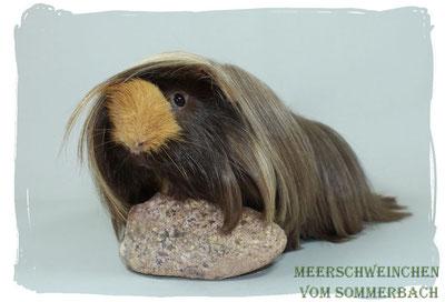 Hagrid vom Sommerbach