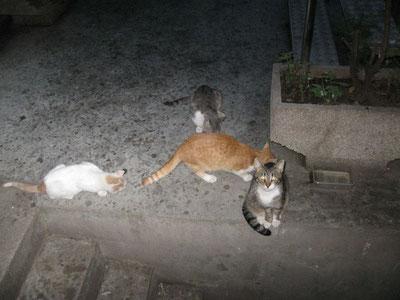 diese Strassenkatzen haben Glück und werden regelmäßig gefüttert