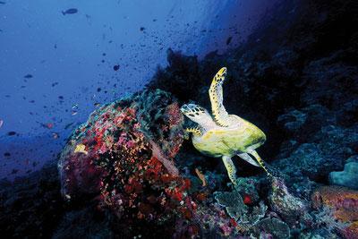 MAG Lifestyle Magazin Reisen Urlaub Familienurlaub Fernreisen Malediven Atmosphere Hotels Resorts Unterwasserparadies Tauchurlaub Oblu Kinder kinderfreundlich All Inclusive