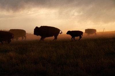 MAG Lifestyle Magazin Reisen Urlaub USA Abenteuerurlaub Unterkünfte Abenteurer The Resort at Paws Up, Blackfoot Valley, Montana