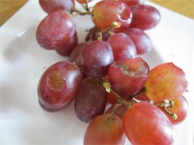 Beatrice Winkel - Weintrauben mit Bissspuren