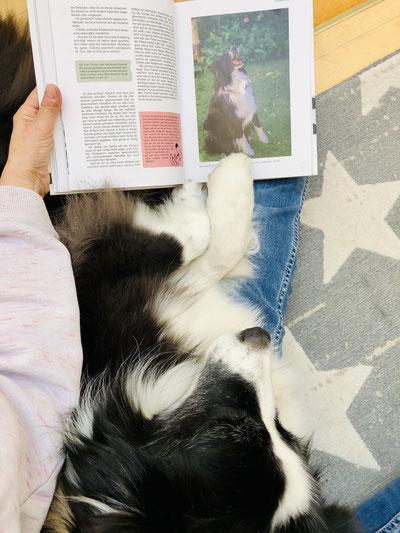 Standard Australian Shepherd Emmely mit Buch Pfote drauf