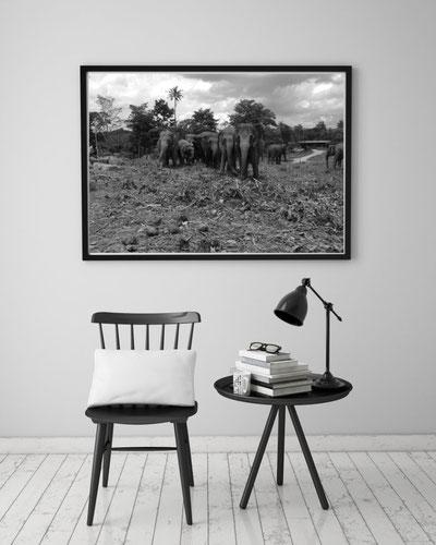 Fotokunst Sri Lanka, Elefanten