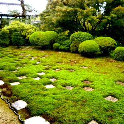 京都で日本庭園を撮影してきました♪
