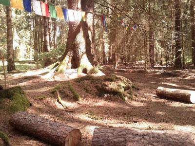 Ritualplatz im Zauberwald