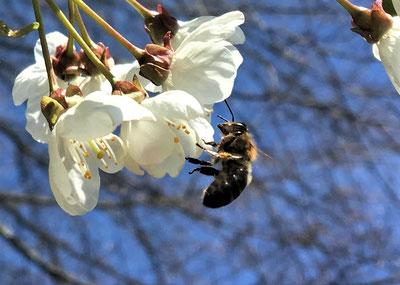 Tragen wir Sorge zu unseren Bienen