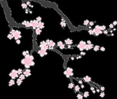 本製品は国産の桜塩漬けを使用しております。