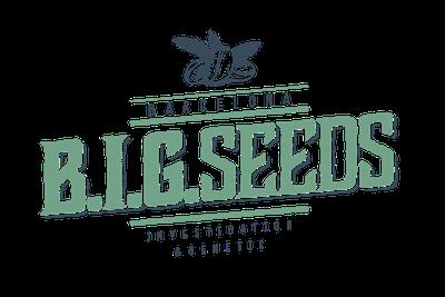 semillas marihuana feminizadas, semillas marihuana big seeds, marihuana rototom, semillas marihuana rototom