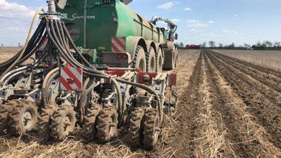 Mais-Aussaat im Strip-Till-Verfahren Deumeland-Kather Ackerbau in der Magdeburger Börde