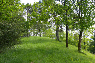 """Wo vor 80 Jahren noch """"im Freien"""" gefeiert wurde, steht jetzt lichter Wald. (c) Freimut Brückner"""
