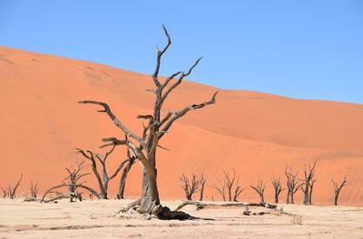 Экскурсия в Мертвую Долину в Намибии