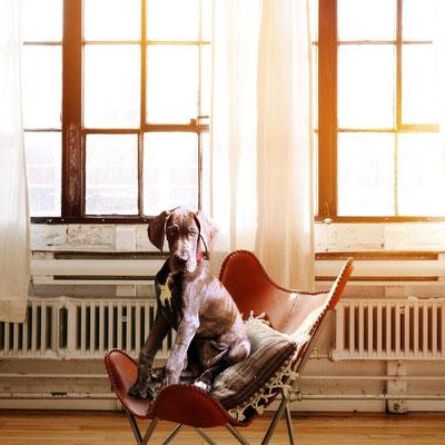 Hundesommer - Alle Fragen zum Hund oder Hundetraining. Lass uns quatschen.