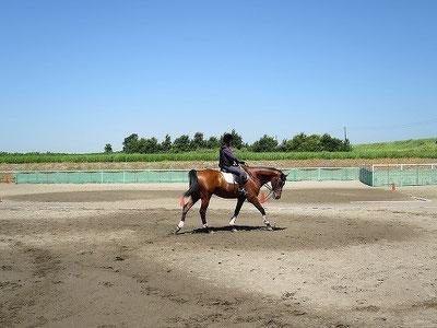 馬と一緒に楽しもう!