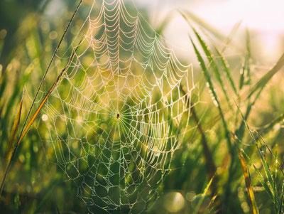 Araignée avec sa toile symbolisant le web