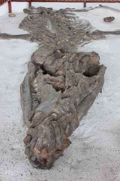 Das Fossil Museum ist beeindruckend, Villa de Leyva, Kolumbien