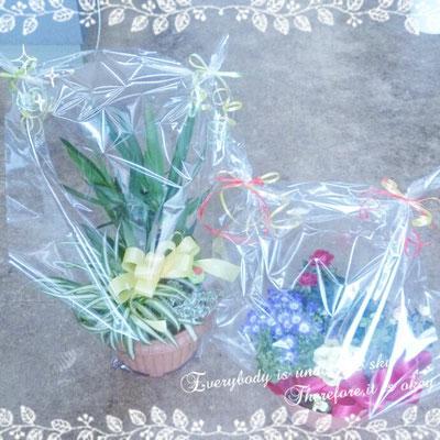 花ひろ 寄せ植え 贈り物