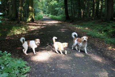 Kabou, Ronja vom Daunchen und Benny von der alten Leine waren trotz Sommerhitze mit viel Spaß in der Buchholz dabei!