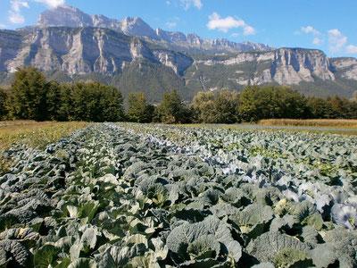 Légumes plantés à la main dans le Grésivaudan
