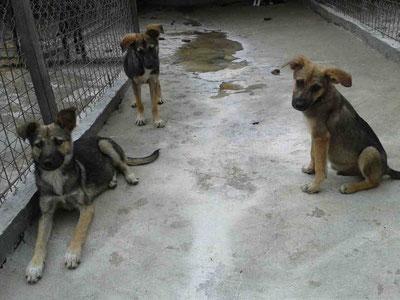 Dina, Daisy und Dixon (von links nach rechts)