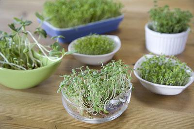 容器で育てられた色んな種類の新芽たち
