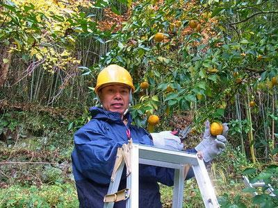 柚子とりをする岡部先生