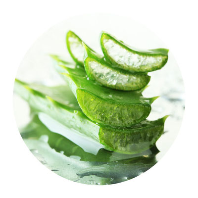 Aloe-Vera-Produkte Forever Living Products FLP Heilpraxis Yogaschule Voglreiter