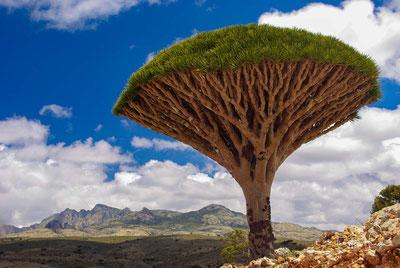 Meine Höhepunkte im Jemen - Sanaa - Wanderung in den Haraz Bergen Bergstadt Al Hajjarah -  Insel Sokotra Thula, Schibam Kaukaban und Wadi Dhar