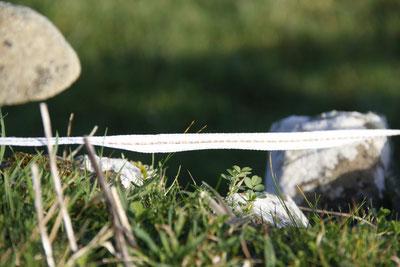 ©Claudia Dorka, Landschaft Details, Stein, Zaunbegrenzung Grasland, Irland