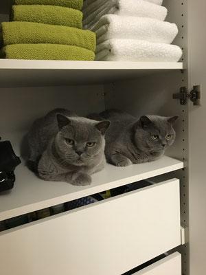 Katzen lieben Schränke von uns...