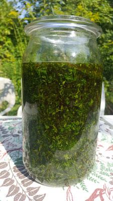 Artemisia Annua in Kreta Bio Olivenöl