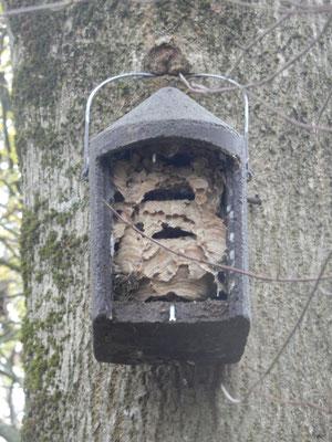 Kasten mit Hornissennest im Stadtwald   Foto: Christiane Gebauer