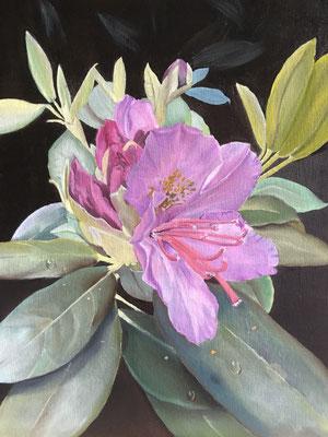 """""""Rhododendron"""" - Öl auf Malpappe, 40 x 30, 2019"""