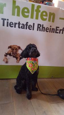 Heidi mit einem neuen Halstuch