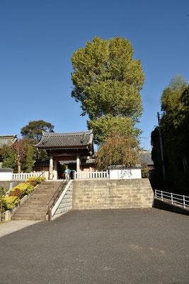 福聚院の銀杏