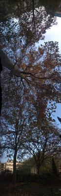 long arbre