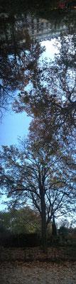 Pano Long arbre 18