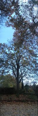 Pano Long arbre 17