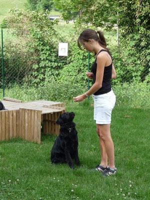 formation éducateur canin Lyon