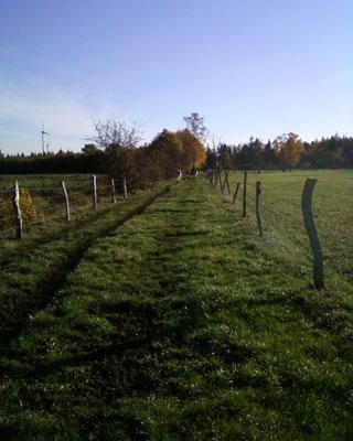 Ein Treibeweg hilft, die Tiere zum Viehanhänger zu treiben.