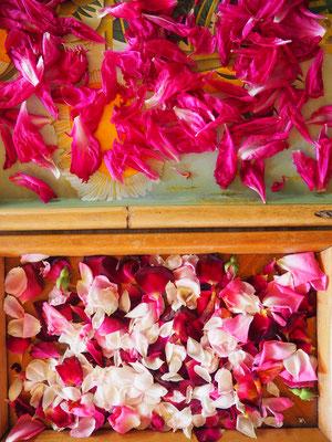 Rosenblätter & Pfingstrosenblätter - für Tee