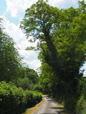 Die kleine Strasse, die mein Grundstück gegen Norden hin begrenzt - mit vielen Akazien