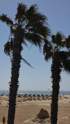 Unter Palme auf Fuerte Ventura
