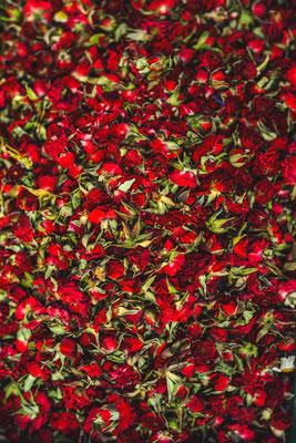 Rosen Rosenblüten rot