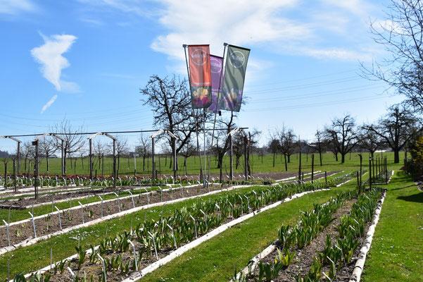 30.03.2021 - 'das IrisFeld' Schaugarten offen - Garden open!