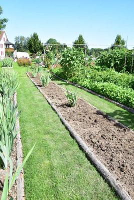 01.07.2020 Iris Sämling Auswahl / re-selection iris seedlings
