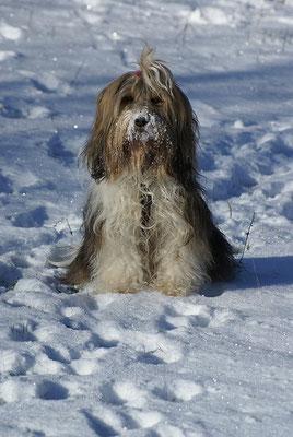 Schnee-Prinzessin Milka - Januar 2016