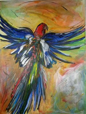 """""""Fliegender Papagei"""" 70/90"""