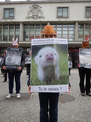 Happening: les animaux sont conscients !
